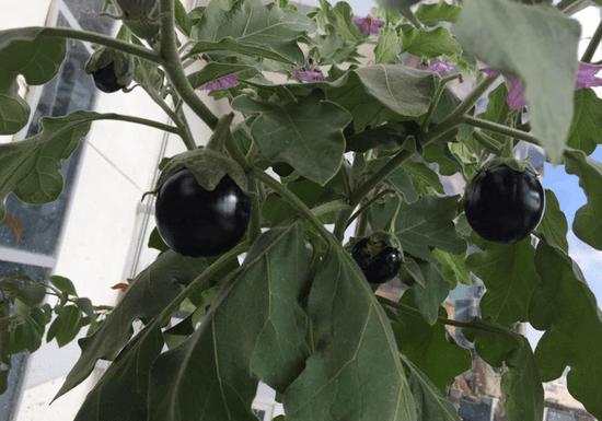 Gardening 101: Start Your Home Garden