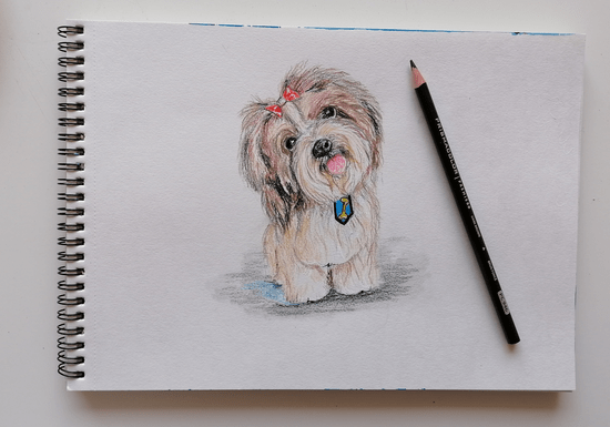 Online Class: Drawing & Sketching for Kids - Ages: 5-13
