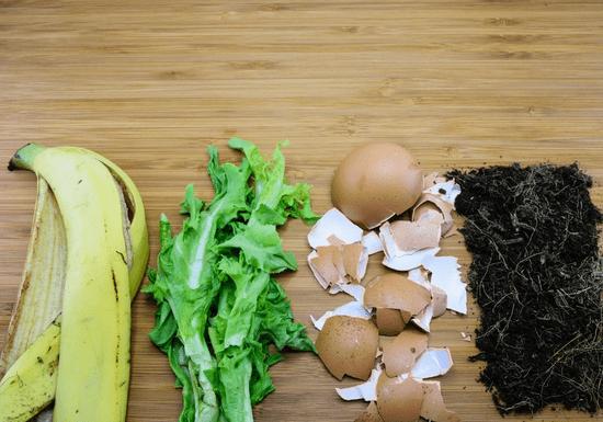 Online Class: Convert Kitchen Waste into Organic Fertilizer