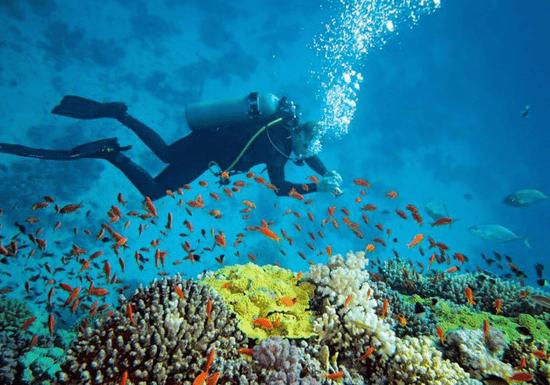 PADI/ NAUI Open Water Scuba Diving Course (Dubai & Fujairah)