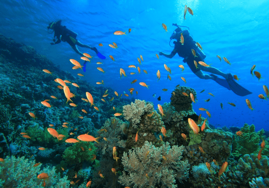 Become a PADI Open Water Diver