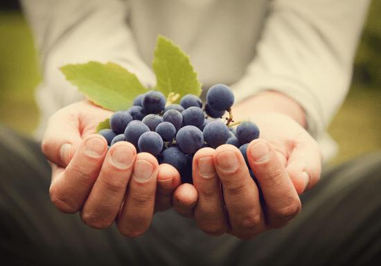 WSET Level 1 Award in Grape Tasting for Beginners