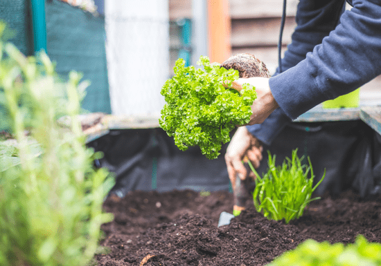Online Class: Intro to Outdoor Planting