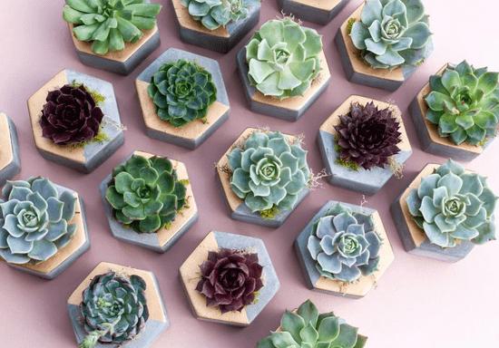 DIY Mini Succulent Planters for Kids - Ages: 8-14