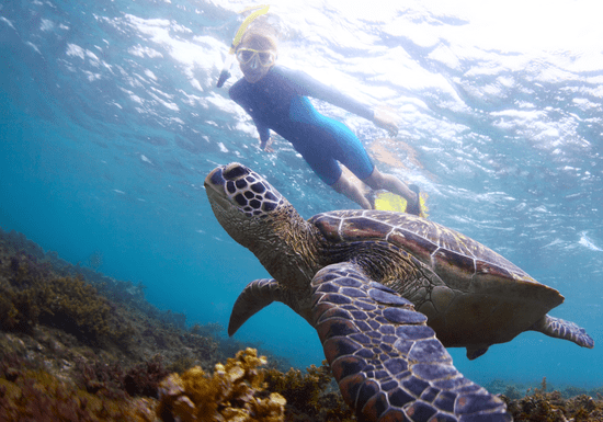 Experience Snorkeling (Fujairah)