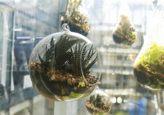 Build Your Own Terrarium Skilldeer