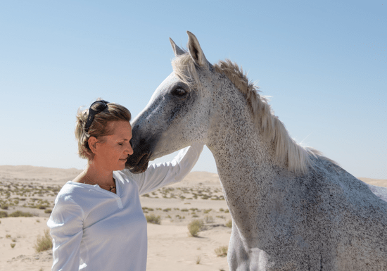 Leading through Uncertainty with Horses