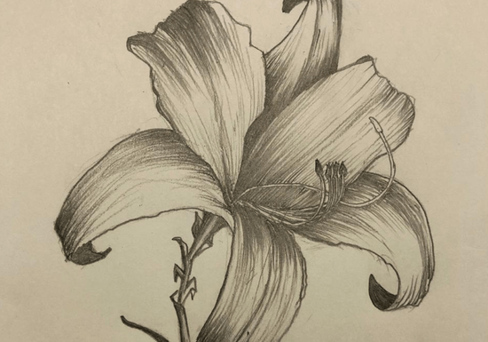 Online Class: Advanced Drawing with Ria