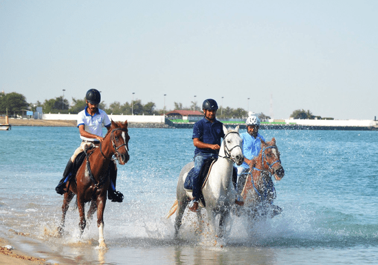 Horseback Riding Group Lessons (All Levels)