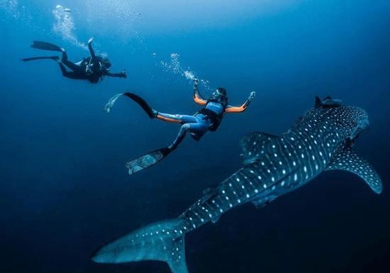 PADI/ NAUI Advanced Open Water Scuba Diving Course (Fujairah)
