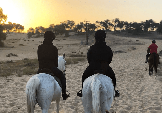 Forest Horse Riding Experience